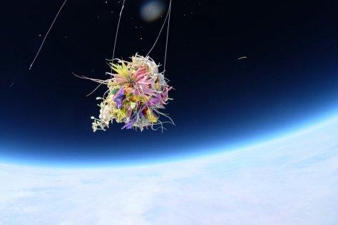 makoto-azuma-EXOBIOTANICA-BOTANICAL-SPACE-FLIGHT-5