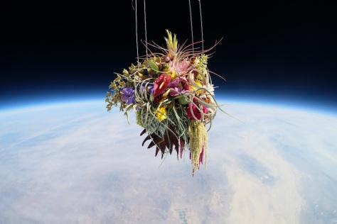 makoto-azuma-EXOBIOTANICA-BOTANICAL-SPACE-FLIGHT-6
